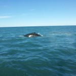 Whale Watching Husavik Island